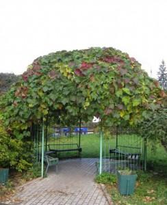 Беседка под виноград – строим каркас
