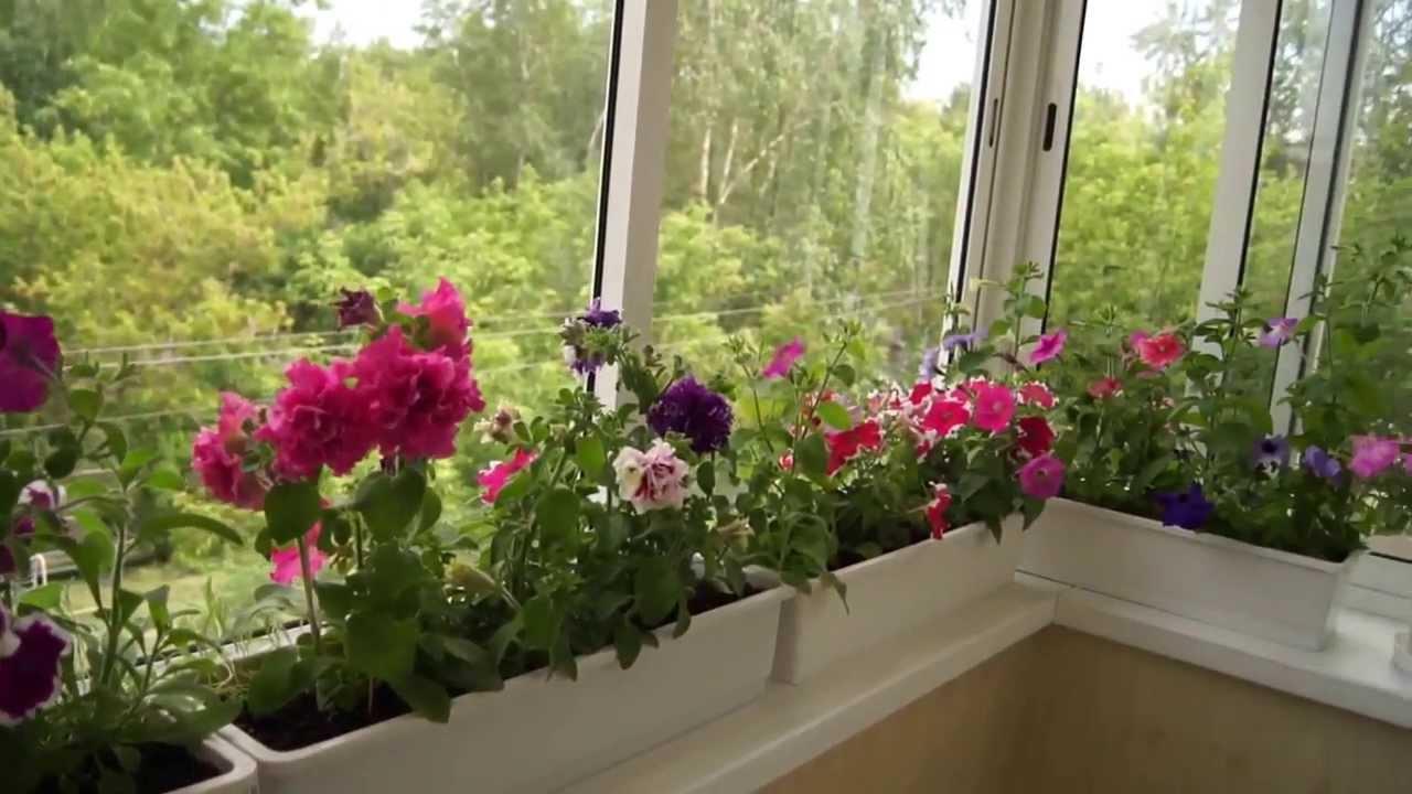 Преимущества зимнего сада в частном доме